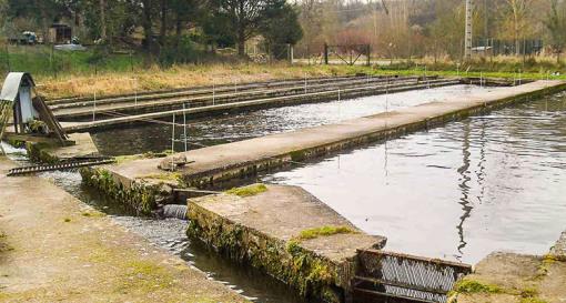 Bassin pisciculture